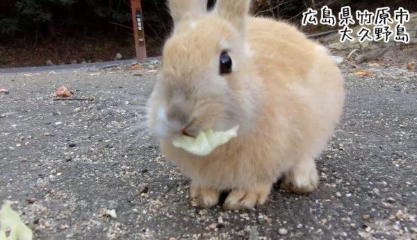 あぁ~心がぴょんぴょんするんじゃぁ~「うさぎの島」広島県の大久野島で、野生のウサギと戯れてきた!