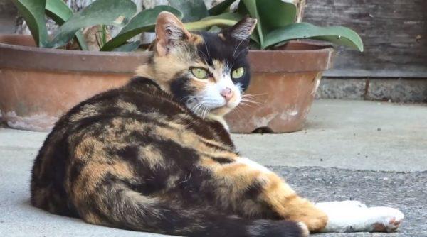 奈良の猫寺「長岳寺」へ。境内でゴロゴロとくつろぐ猫たちを、思う存分モフッてきた!