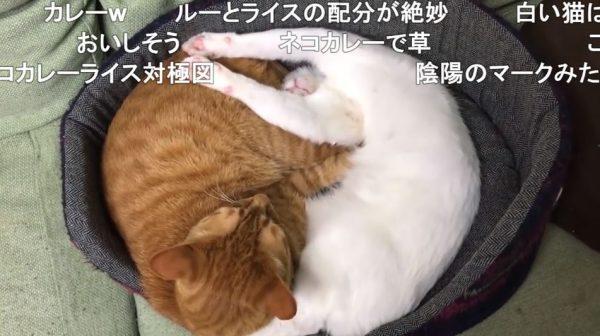 半目だったりバンザイ寝だったり、猫ちゃんのバリエ豊富な寝相に「どうなってんだ」「かわいい‼」「カレーライス」の声集まる