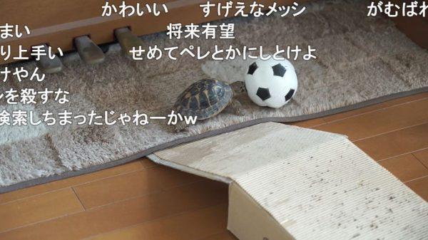 """サッカーボールをドリブルする""""亀""""の登場に「すげえなメッシ」「カメッシ」と沸き立つも、「メッシ生きとるがな」のツッコミが入る"""