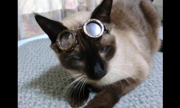 """その佇まいはネコ飛行師団のエース・パイロット? """"スチームパンク風""""の猫用ゴーグルを作ってみた"""