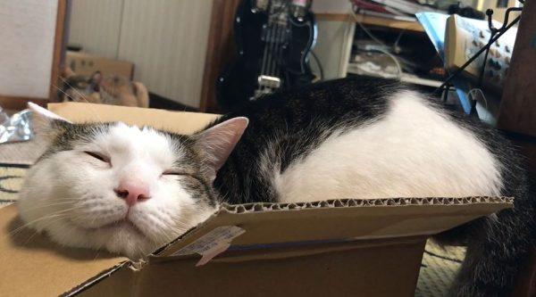 """はみケツしてるんだが…小さな箱にみっしりと収まる猫ちゃんの""""至福の表情""""に「満足そう」「いいのか…(困惑)」の声"""