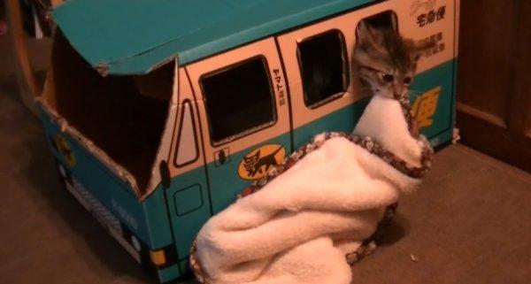 絶対に毛布を運びたい子猫 vs どうしてもそれを手伝いたい神の手(?)奮闘する子猫に「かわいい」「がんばれ!」の声多数