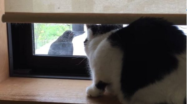 「ニャンかめっちゃ言ってるんだけど」窓ガラス越しに煽ってくるカラスの登場で、固まってしまった猫