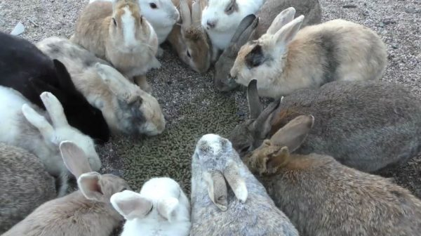 """ウサギの目線になってみよう! 上から見ていたウサギの食事風景を""""視点を変えて""""覗いてみると、そこには「モフモフ幸せ空間」が広がっていた"""