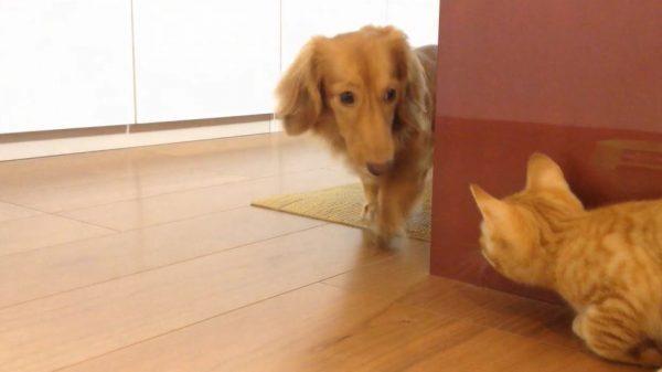 """このコンビ可愛すぎ! 犬と子猫の""""鬼ごっこ""""が最高に楽しそうで「ニヤニヤが止まらない」「しあわせな世界」の声"""