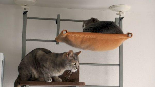 """2匹の猫のゆる~い争奪戦⁉ ハンモックを狙うも負け続けた猫、ようやくハンモックを手に入れ""""ドヤり顔""""を見せる"""