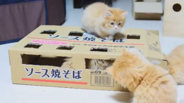 モグラたたきならぬ子猫たたき⁉ 焼そばの空き箱に穴を開けたら、猫があつまる「神の領域」と化した