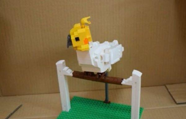 """オカメインコを飼いたくて""""レゴで""""作ってみた! エサ入れや豆苗まで再現するリアルさに「切ないw」「愛は伝わったよ」の声"""
