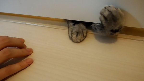 """ドアの下から""""猫の手""""がニョキニョキ! 飼い主をつかまえようと奮闘するアメショの子猫の姿をお届け"""