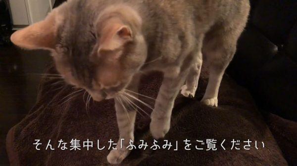 毛布をふみふみする猫…集中しすぎるあまり、なんでふみふみをはじめたか忘れるほどのゾーンに突入!