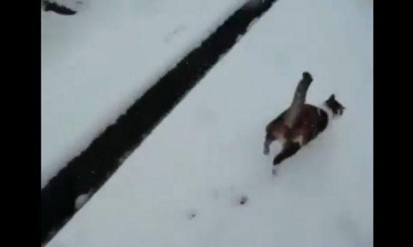 猫ちゃん、たくさん積もった雪に大はしゃぎ! 散歩に付き合ったお父さんが「帰ろう。もう寒い!」と音を上げる事態に
