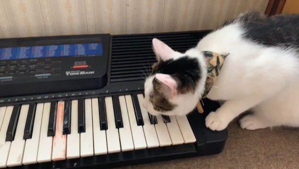 猫にキーボードを見せてみたら…? はじめは音にビックリするも、だんだんノッてくる猫ちゃんに「うまい!」「センスあるんじゃねw」の声