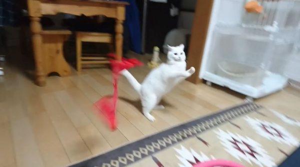 風船が割れた…そのとき猫はどうする? 「えっ…お前なんだよ急に」と戸惑う猫たちの反応が微笑ましい