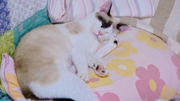 この猫の足の位置、不思議じゃない? 遊び疲れて眠る猫の姿に「どうなってるの⁉」「すげーな」の声
