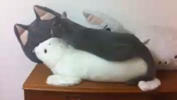 何秒で見つけられる? ぬいぐるみと同化した猫、あまりのステルスっぷりに「一瞬分からなかった」「素晴らしい擬態」の声