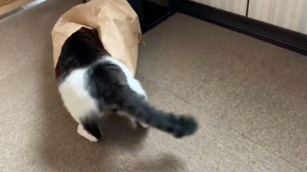 """猫に紙袋を見せてみたら…ビビりつつ、行くと決めたら""""ダッシュで""""飛び込む猫ちゃんに金メダルをあげたい"""