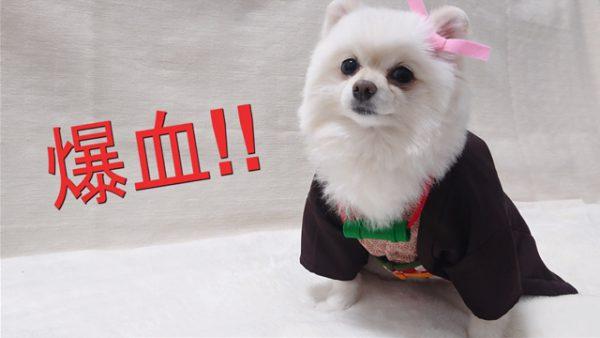 """『鬼滅の刃』禰豆子の""""犬用""""コスプレ服を作ってみた! 見事な出来栄えに「かわいい!」の声多数"""