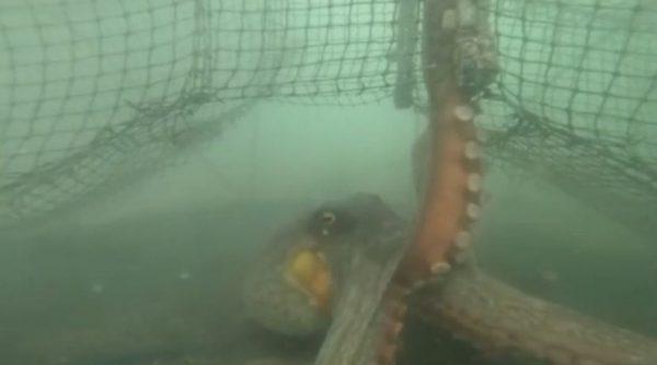 【悲報】GoPro、タコに襲われてしまう。衝撃の水中映像と結末に「このタコ! 」「ホラーやんけ」の声