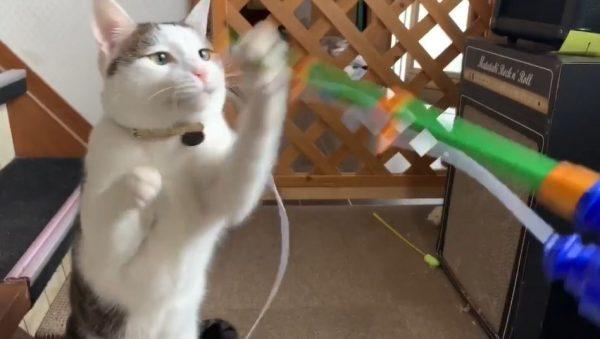 """猫の前で「おもちゃの魚釣り」で遊んでいたら…釣り糸でじゃれる→釣った魚に猫パンチ→""""猫を釣る""""にいつの間にか遊びが変化していた件"""