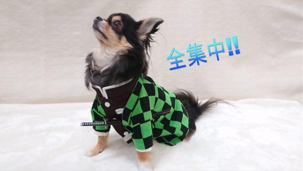 """『鬼滅の刃』炭治郎の""""犬用""""コスプレ服を作ってみた! 見惚れるほどの再現度に「愛がすごい!」の声多数"""