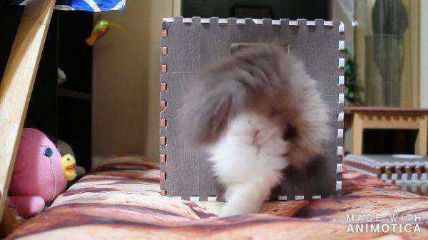 """モフモフの猫ちゃんが箱に吸い込まれていく…""""猫は液体""""説を実証する後ろ姿に「かわいい」の声"""