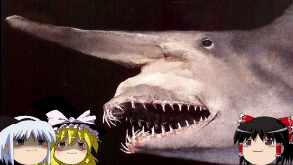 深海に住む神秘的な生き物たちを見てみよう。ラブカ、リュウグウノツカイ、ブロブフィッシュ…この世のものとは思えない恐怖の姿を一挙紹介!