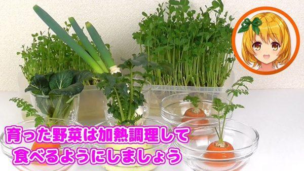 """再生野菜「リボベジ」を""""農業系""""VTuberが解説…野菜ごとのアドバイスも丁寧で試してみたい!"""