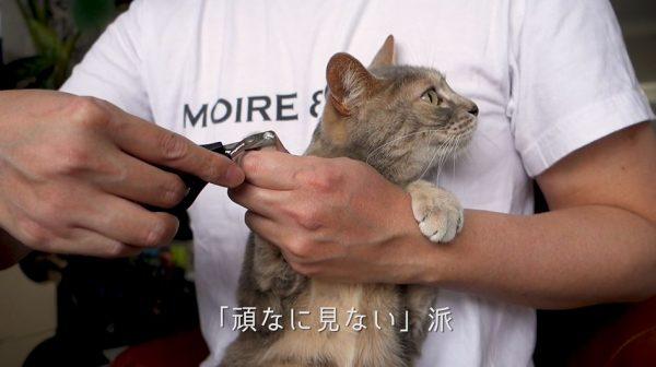 2匹の猫、恐怖の爪切りを体験…目を逸らして苦境を乗り切る猫たちに「とってもいい子」「可愛すぎる」の声