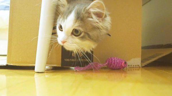 子猫とダンボールとおもちゃ…ネズミを捕まえようと奮闘する子猫に「かわいい」「顔全部出るのすこ」の声