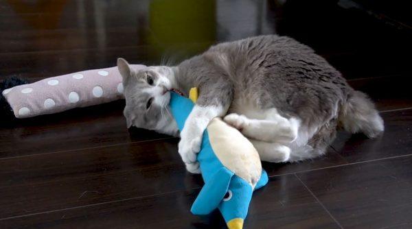 マタタビをキメた猫達…ちょっと荒ぶったり、とろけたり、ウネウネする姿に「腹を撫でたい」「軟体動物」の声