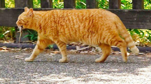 トカゲに逃げられた猫…表情の落差に「哀愁漂っとる」「さっきまではウキウキだったのに」の声