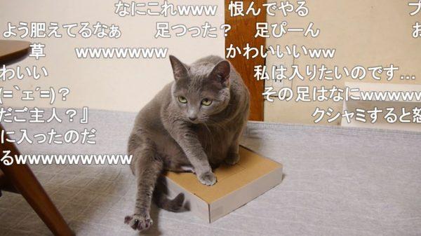"""ダンボール箱の穴に入りたい猫…箱との一体化を求めた結果""""謎のポーズ""""に落ち着き「なにこれw」「これでいいのだ」の声"""