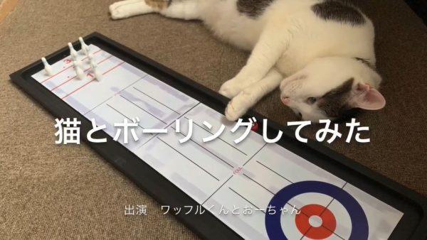 """猫とボウリングをやってみた…ピンを並べるにもボールを投げるにも""""立ちはだかる猫""""を前に、果たしてストライクは狙えるのか⁉"""