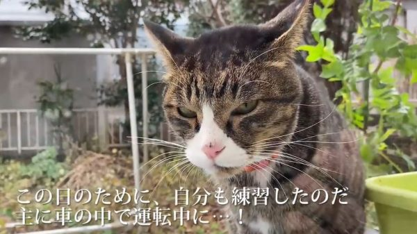 首輪付き猫VS人間… 飼い猫を守るため立ち上がった飼い主の姿をどうぞご覧ください