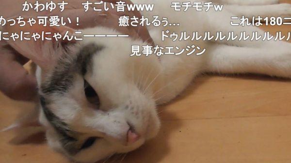 床がひんやりで気持ちいいニャン…のどをゴロゴロ鳴らして転がる猫に「かわいい」「どこで売ってるエンジンですか?」の声
