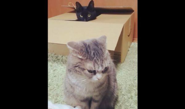 """""""何かが起きそう""""な猫たちの日常…ダンボールに潜む黒猫とその前で座る猫の関係に「かわええ」の声"""