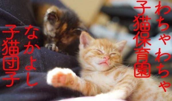 """お昼寝タイムの子猫姉妹…思い思いに動くので""""一瞬で崩れる""""子猫団子に「かわいすぎ!」「いやされるぅ」の声"""