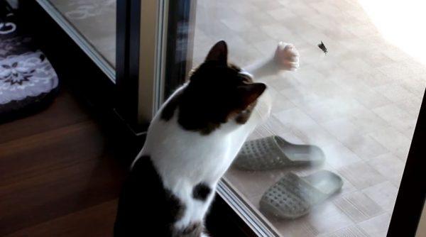 """猫VS窓にとまった虫…""""決して勝てない""""窓越しの戦いに挑んだ猫ちゃんへ「可愛すぎる」の声"""