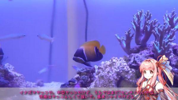 """10種以上の海水魚と6種のサンゴが共に暮らす90センチ水槽が最高の癒やし…""""マリンアクアリウム""""を眺めてみよう"""