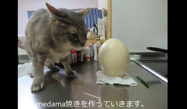 """道の駅で「ダチョウの卵」売ってるのヤバすぎん? せっかくなので購入して""""巨大目玉焼き""""に挑戦してみた"""