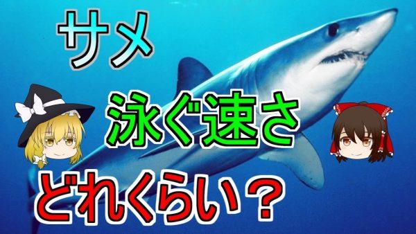 サメの泳ぐ速さは人間の10倍だった! 「狙われたら逃げ切れる可能性0%」なサメの速さについて調べてみた