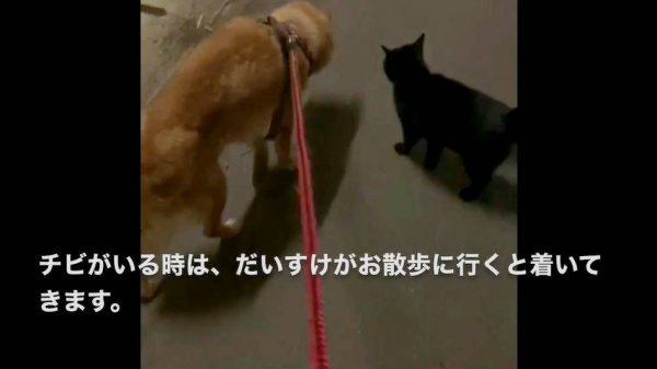 うちの犬が好きすぎて、散歩についてくる野良猫…寄り添い歩く2匹の姿が尊い!