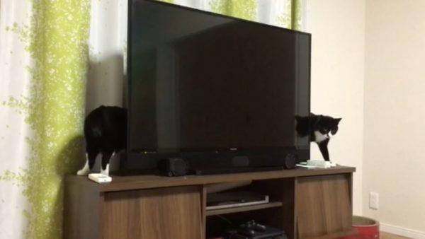 胴体がめちゃくちゃ長い猫⁉ テレビの後ろからヌッと現れた猫ちゃんに「ふわっ⁉」「ながすぎぃ」の声