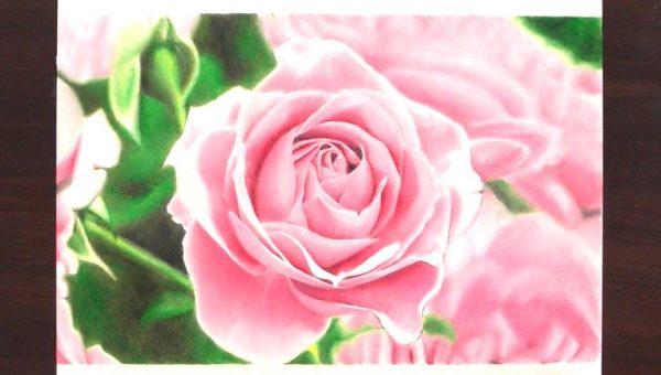 """「バラの写真」を""""色鉛筆で""""模写してみた! 透明感やピントまで表現する描き込みに「えっ…!?」「うますぎる」と驚きの声"""