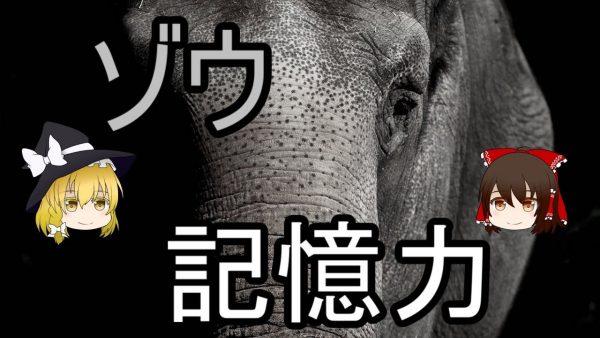 ゾウは20年前のことも覚えているらしい! 群れの仲間や水場の場所まで忘れない、すごすぎるゾウの記憶力を解説してみた