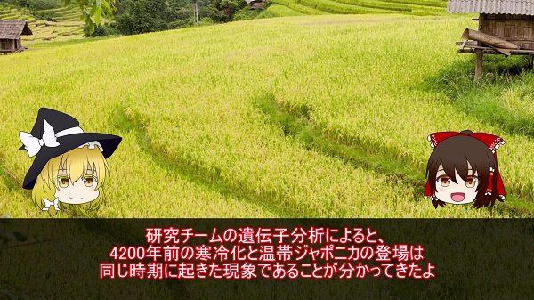 """いま話題の""""稲作""""進化の歴史をおさらいしてみよう。 最新のゲノム解析により判明した「4200年前の出来事」が日本米に与えた影響とは?"""