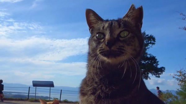 絶景×猫様。琵琶湖を一望できる展望テラスに集合し。思い思いに寛ぐ姿に「かわいい」の声