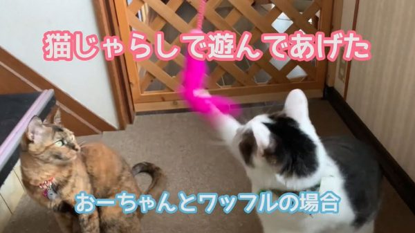狩りの上手い猫とそうではない猫…⁉ 猫によって違う「猫じゃらしの遊び方」を比べてみた!
