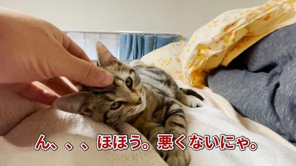 """マッサージを受ける子猫、気持ち良すぎてウトウト…うっとりしてるのに""""キレる""""理不尽な生態に「超絶可愛い」の声"""